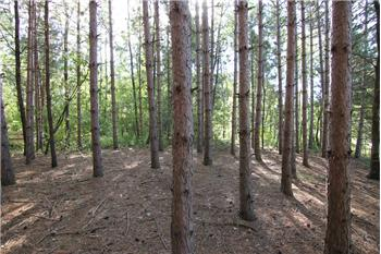 Lot 9 Fur Ct, Wisconsin Dells, WI